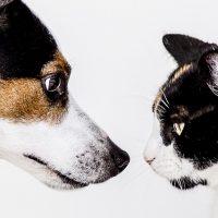 Trends in veterinair