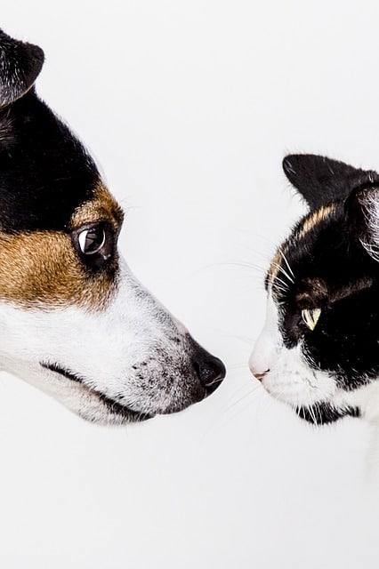 Trends in veterinair nederland; ZZP'ers, CAO en ketenvorming